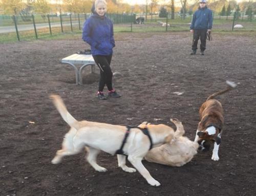 Koirapuistokysely