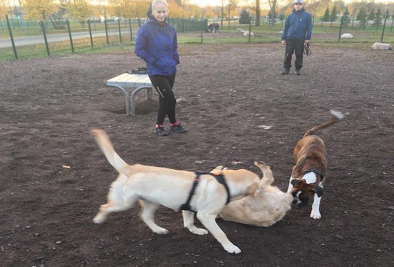 Koirat koirapuistossa