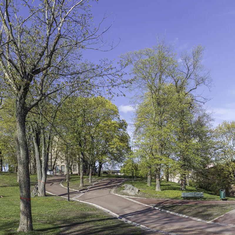 Puolalanpuisto merkityt jalavat.